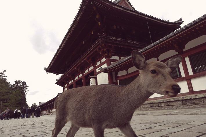 Découvrir le Japon en voyage en Asie