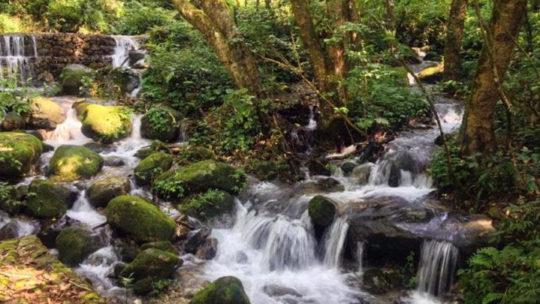 Randonnée dans le parc national de Shivapuri Nagarjun à Katmandou, Népal.