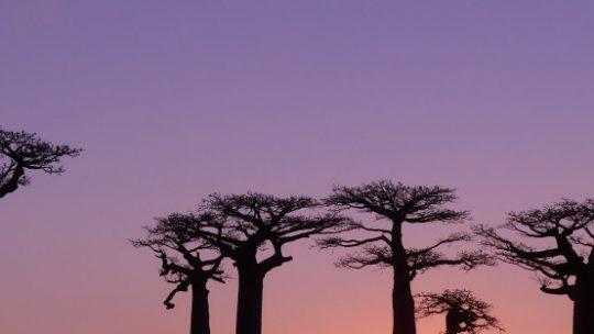 A voir à Madagascar: 8 incontournables