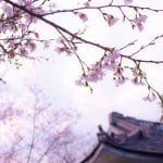 Comment faire une décoration de chambre japonaise ?